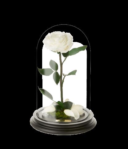 Rose im Glas in champagne - Laroosa Magic