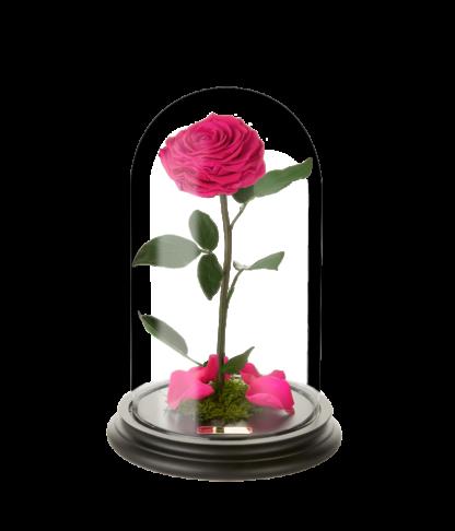 Rose im Glas in perfekt pink - Laroosa Magic