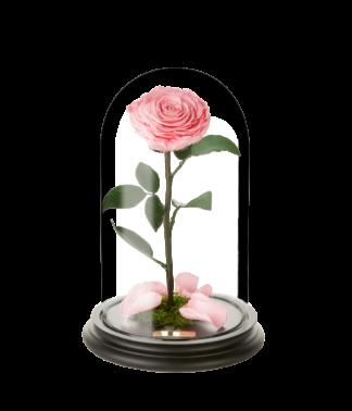 Rose im Glas in princess rose - Laroosa Magic