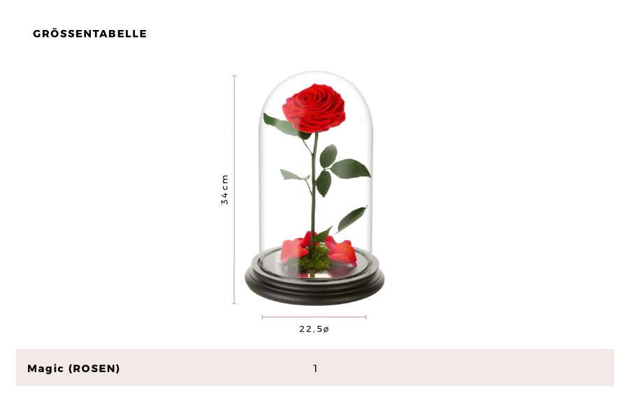 Rosenboxen Größentabelle - Infinity Rosen